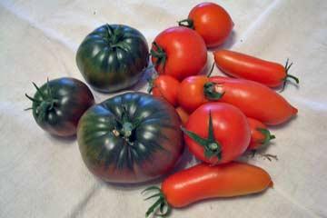 My Tomatos