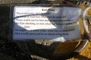 Portland Buff Pony