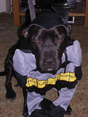 Shadow Doesn't Like His Costume
